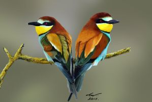 Bee-Eaters by niveky