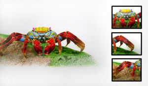 Crab Illustration by magg1303