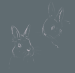 Bunny by Ombreuse