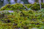 Moss Stock 01 Feb 2017.. by AledJonesStockNArt