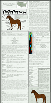 Bashki Horse Breed Sheet -new- by Baringa-of-the-Wind