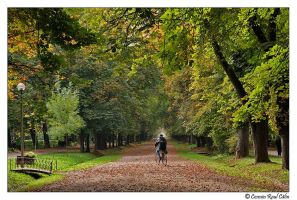 Cluj central park by calincosmin