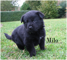 Milo 5 weeks by Gex78