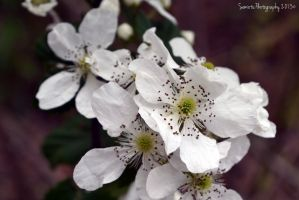 Ivory vine by SemioticPhotography