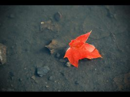 Lonely red drop. by MUA-Maano