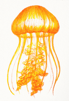 Inktober: Sea Nettle by Cortoony