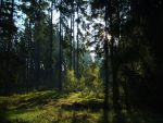 southern forests III by WandererOfNight