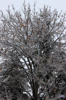 Ice Tree by dreamwriter12