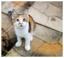 Kitten by BigCountryGraphix