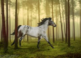 Run in the woods by PhotographyAndGoats