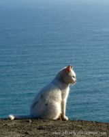 little white cat and an endless sea by Mari-Ghostly