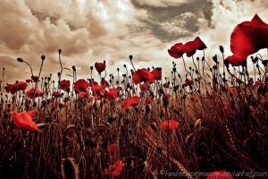 poppyworld by landscapesaxony