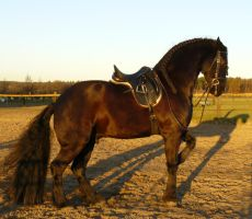 frisian learns rearing by Nexu4