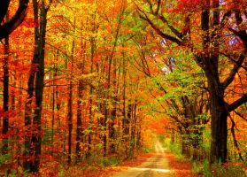 Autumn Road by Afotographer