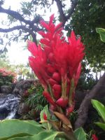 red tropical plant by kaitlynnasslebell