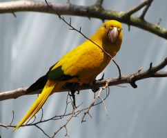 Bird Stock 2: Parrot by HOTNStock