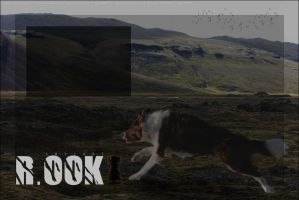 R.ook Layout by hls-mircea