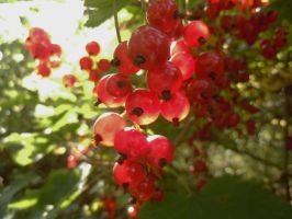 Redcurrant by michawolf13