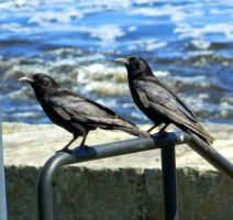 River Crows II by SlateGray