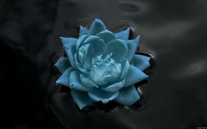 EgFox Flowers touch Blue 2010 by Eg-Art