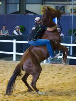 STOCK - 2014 Total Equine Expo-39 by fillyrox