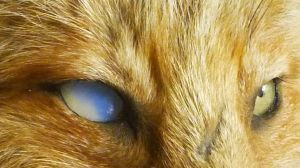 Eyes by Tricksters-Taxidermy