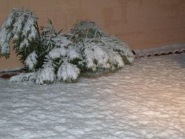 Snowstorm 2007-Snow bush by MistyKoopa