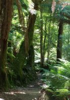 Liffey Falls - Rainforest 6 by Gracies-Stock
