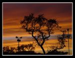 Tree at Dusk by dj-tempora