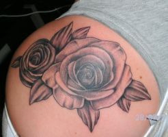 Roses by zok4life