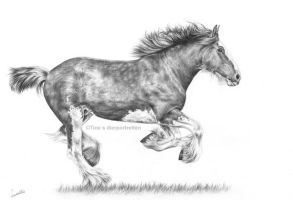Dexter the Clydesdale, graphite drawing by Tinesdierportretten