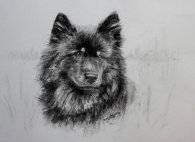 Eurasier by smartisgirl