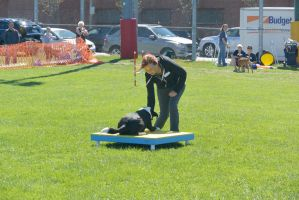 2014 Dog Festival, Agility Contest 19 by Miss-Tbones