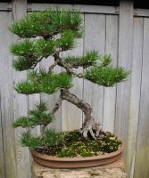 Walking Bonsai with Arms by AndySerrano