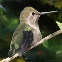 Hummingbird by jfong