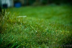 Watered grass - Day 102 - 12/04/13 by oEmmanuele