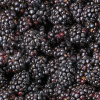 Blackberries by lylejk