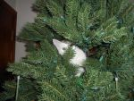 Kitten in a Christmas Tree 1 by ulyferal