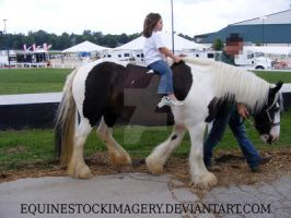 Gypsy Vanner 6 by EquineStockImagery