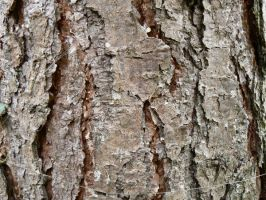 wood_texture_1 by pebe1234