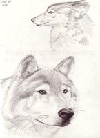 Wolf studies by superchickenn123