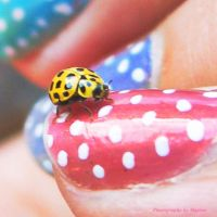 Polka Dot Friends 2 by maxine-photo