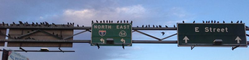 Birds on a Freeway Sign by CarolinesEcho