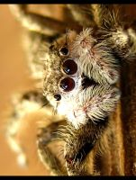 Spider Portraiture 3 by FramedByNature
