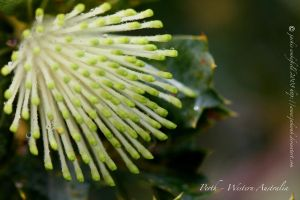 spikes of green with jewels by jakwak