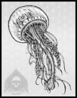 jellyfish by pande-lee
