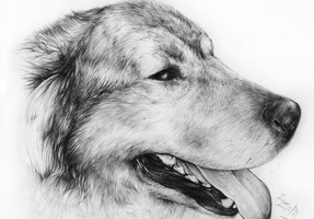 Szonja-dog portrait by lycangel