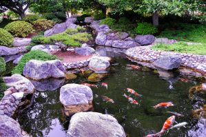 Japanese Garden Tranquil Koi by AndySerrano