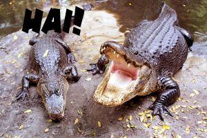 LOL Gators 5 by SirPreacher