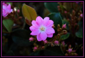 Flower CXI by AletheaDo